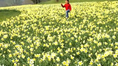 Cute african american child playing in a field of daffodils — Stock Video