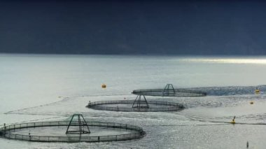 Floating nets of a salmon farm on a nordic fjord — Stock Video