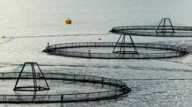 Floating nets of a salmon farm in a glacial fjord — Stock Video