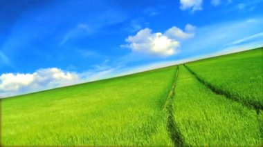 Green grass fields & clean environmental image beneath blue sky — Stock Video