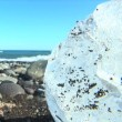 Melting glacial ice from climate change washed up on an arctic beach — Stockvideo