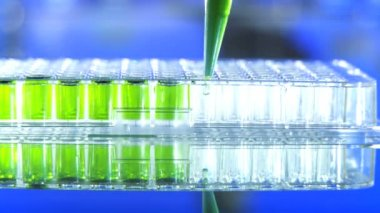 Close up of a microplate and a pipette filling the wells with green liquid — Stock Video