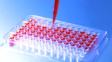 Close up of a microplate and a pipette filling the wells with blood — Vídeo Stock