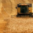 Combine harvester gathers the wheat crop - Stock Photo