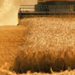 Combine harvester gathers the wheat crop — Stock Video #20805097