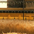 Combine harvester gathers the wheat crop - Foto Stock
