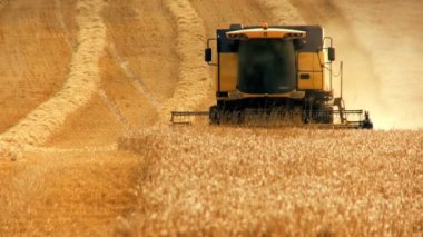 Combine harvester gathers the wheat crop — Stock Video