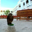 Trained bird of prey on its perch in traditional middles eastern courtyard - Stock Photo