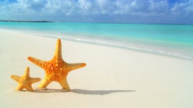 Starfish washed up on white sandy beach & aqua blue sea — Stock Video