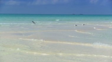 Seabirds & aqua green waters washing over stunning white sandy beach — Stock Video