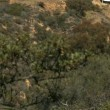 Hollywood Sign - Foto Stock