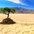 Concept of Living Tree in Desert Wilderness - Stockfoto