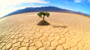 Wide-angle Concept of Living Tree in Desert Wilderness — Stock Video