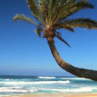 Idyllic Palm Tree Landscape - Stockfoto