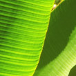 Stock Video: Tight Close-up of Rainforest Flora