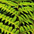 Rainforest Leaves in Close-up - 图库照片