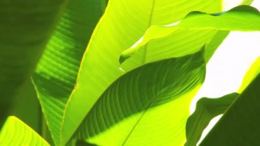 Beautiful Exotic Rainforest Flowers — Stock Video