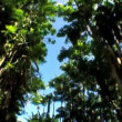 Point-of-View Through Rainforest Trees — Stock Video #21211455