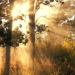 Stock Video: Volcanic Steam & Sunlight Effects