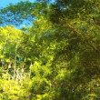 Stock Video: Rainforest Bamboo Trees
