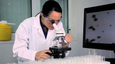 科学的研究 — ストックビデオ