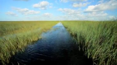 Florida Everglades Ecosystem — Stock Video
