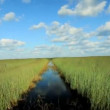 Airboat in Florida Everglades - Stockfoto