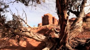 Arid Desert and Foliage, Monument Valley — Stock Video