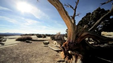 Drought Stricken Tree in Desert Landscape — Stock Video
