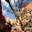 Stock Video: Dead Tree in Sandstone Gorge