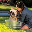 Young Girl Bathing her Pet Bulldog — Stock Video
