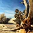 Stock Video: Dead & Living Vegetation in Desert Landscape