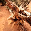 Overhead View in Close-up of Dead Tree — Stock Video