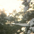 Wind Blowing Winter Snow From Trees — Stock Video