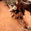 Stock Video: Dried Up Tree in Arid Environment