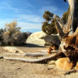 Stock Video: Dead Tree in Desert Wilderness