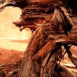 Stock Video: Petrification of Dead Tree in Desert Landscape