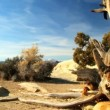 Stock Video: Desert Beauty in Arid Environment