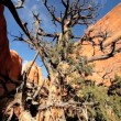 Stock Video: Tree Damaged by Environmental Drought