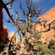 Stock Video: Arid Landscape of AmericSouthwest