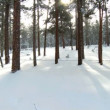 Forest With Winter Snow - Stock Photo