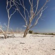 Bleached Tree Branches in Dry Lake Bed — Stock Video #22753395