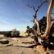 Stock Video: Drought Stricken Tree in Desert Landscape
