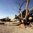Stock Video: Dead Tree in Barren Wilderness