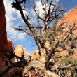 Stock Video: Dead Tree Caused by Desert Drought