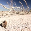Dry Lake Environment - Stock Photo