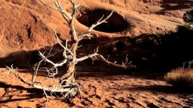 Petrified Tree in Barren Environmental Landscape — Stock Video