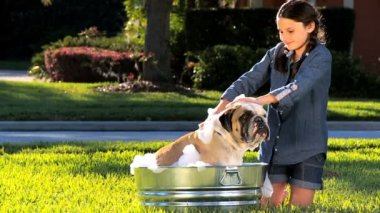 Young Girl Bathing Family Bulldog — Stock Video