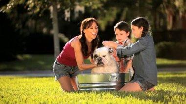 Baño familiar joven mascota bulldog — Vídeo de stock