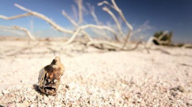 Dry Lake Bed & Skeletal Fish — Stok video
